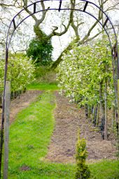 the orchard beyond the archway
